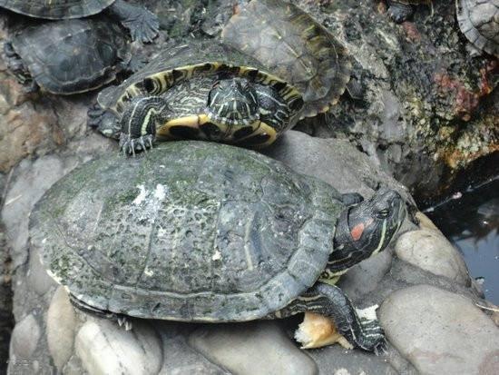 乌龟隔离期间要注意什么?